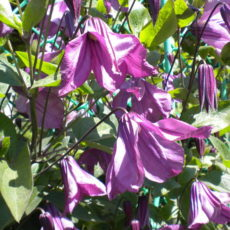 Травянистые культуры и цветы